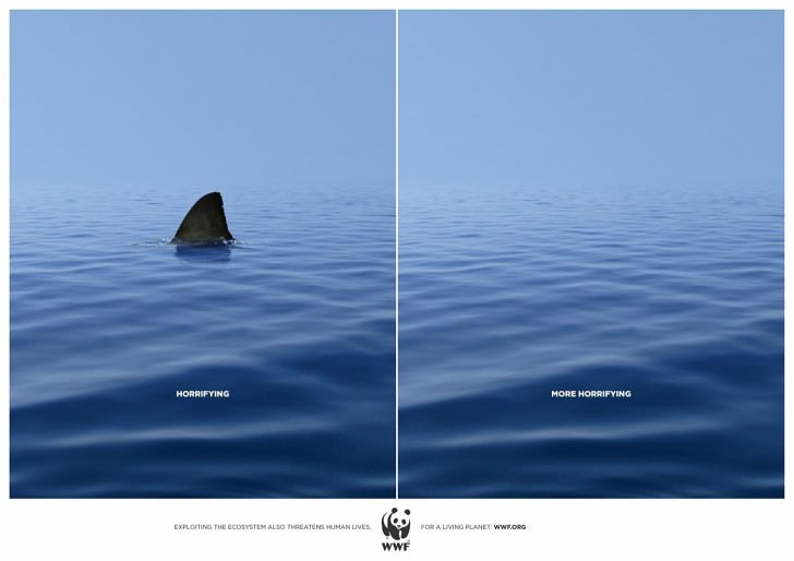 wwf shark Against Animal Cruelty