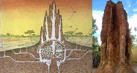 termite mound architecture house ants